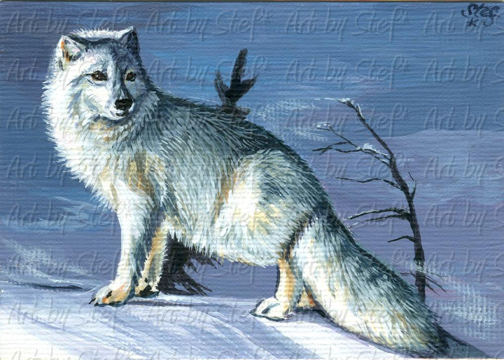 Other Animals; Artic Fox Freeze; ACEO; Stef
