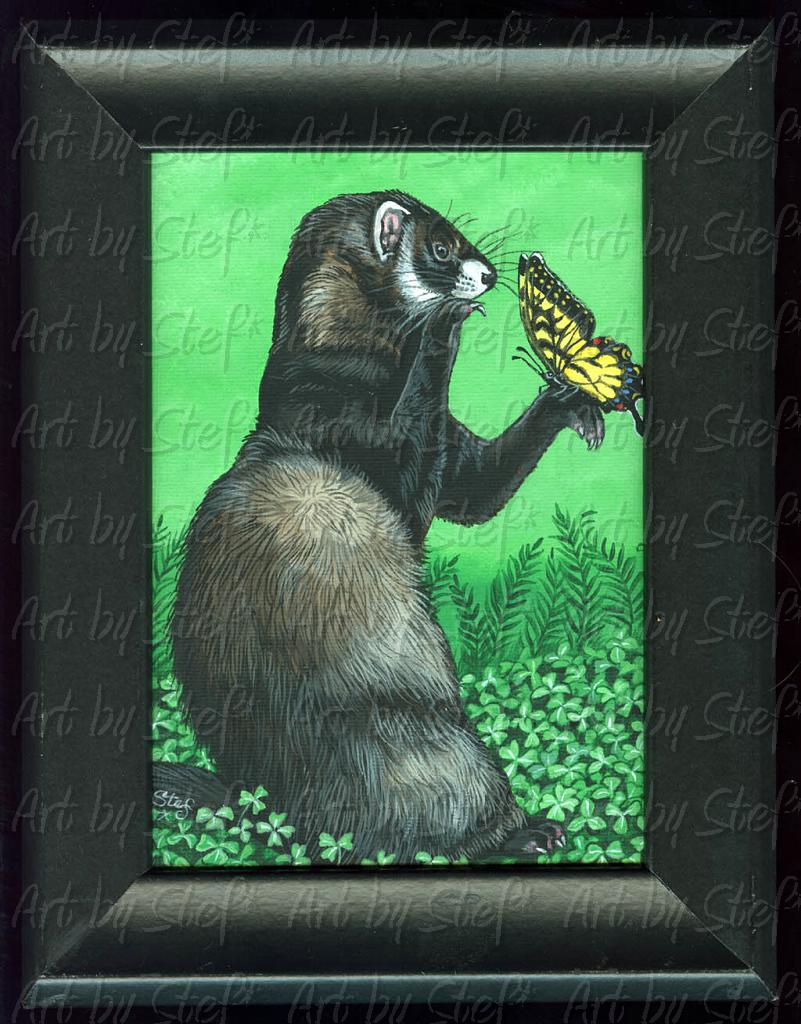 "Ferrets; Black Irish Ferret; Acrylic on 5""x7"" canvas panel, framed; Stef"