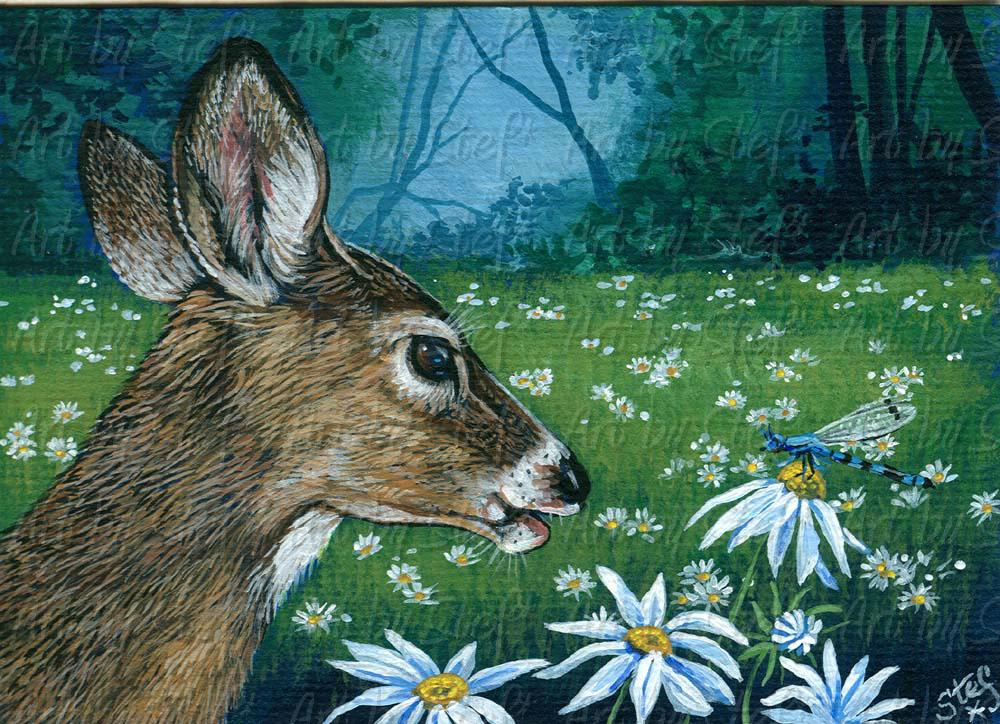 Other Animals; Deer Daisies and Dragonfly; Acrylic ACEO; Stef
