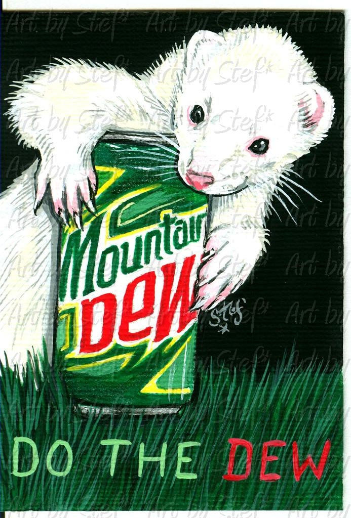 Ferrets; Do the Dew; Acrylic on canvas ACEO; Stef