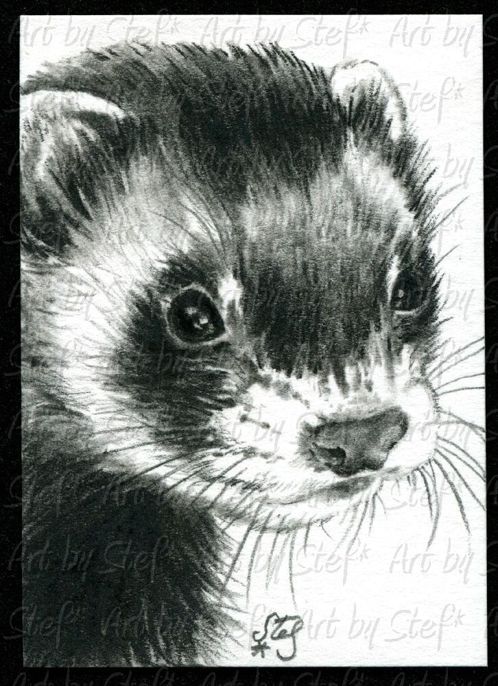 Ferrets; Hope; Charcoal sketch; Stef