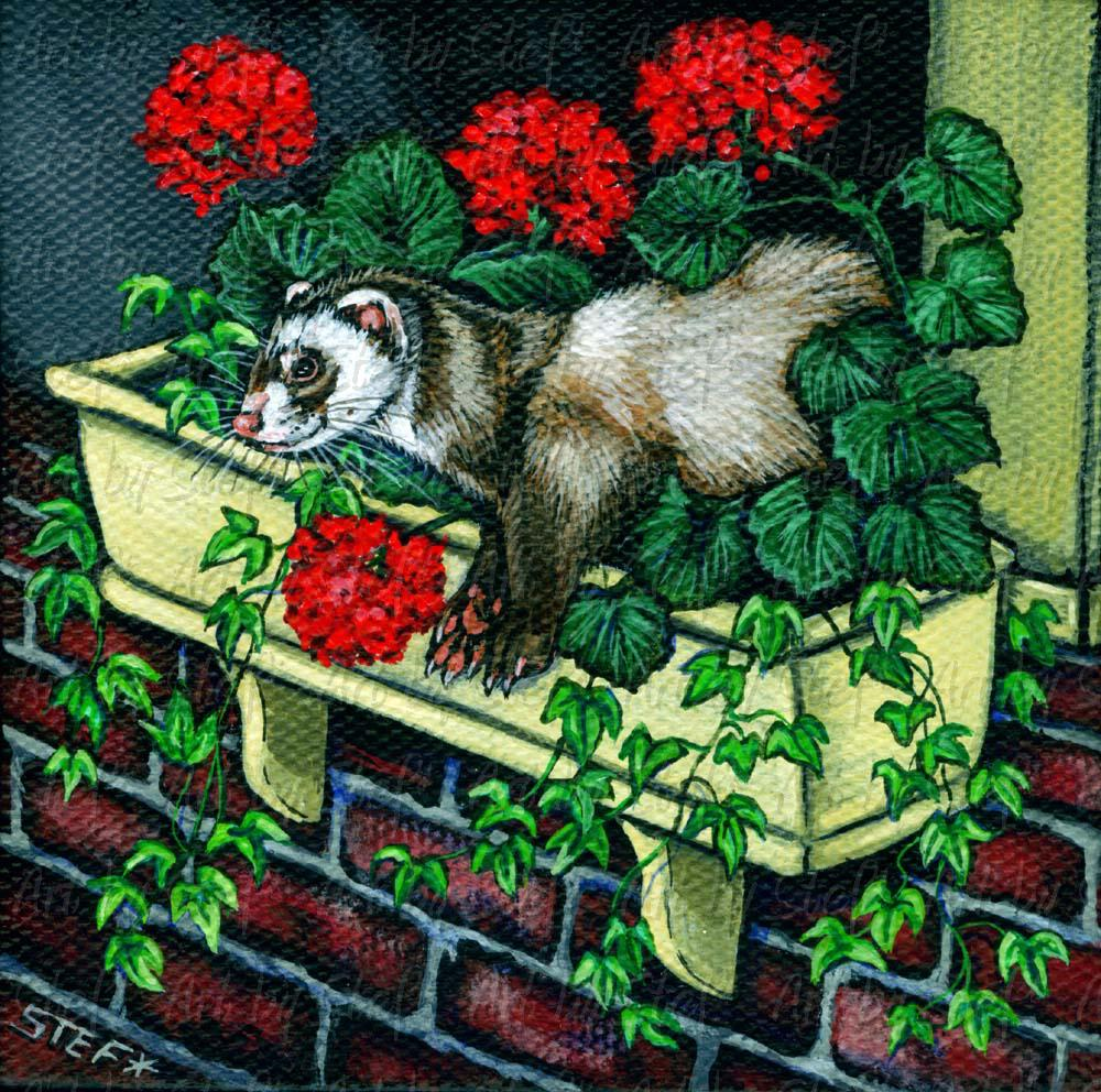 Ferrets; Ivy and Geraniums; Miniature painting; Stef