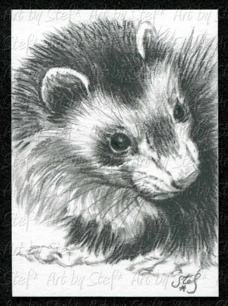 Ferrets; Love; Charcoal sketch; Stef