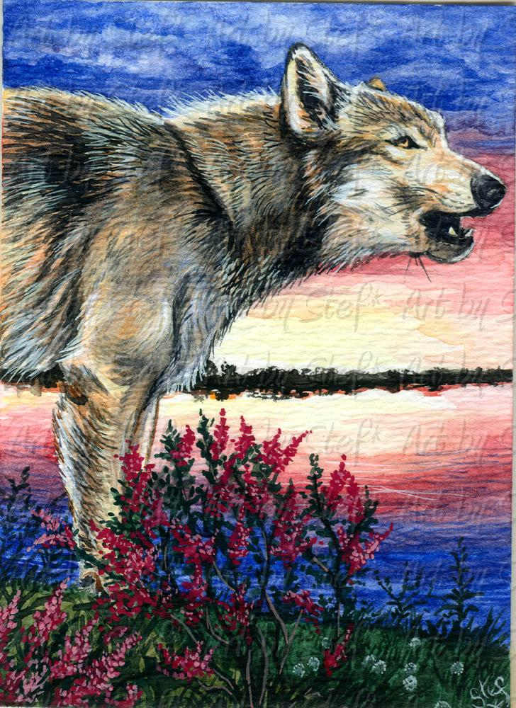 Other Animals; Lupus Love Song in C; ACEO; Stef