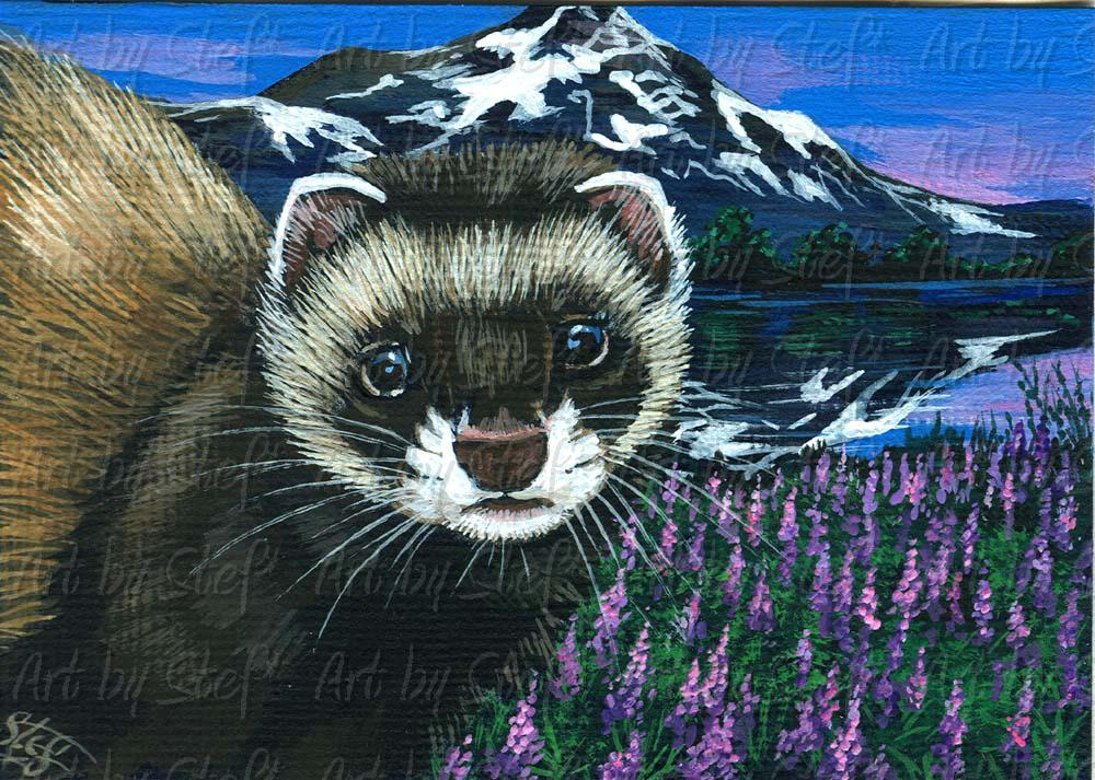 Ferrets; Mountain Lake Ferret; Acrylic ACEO; Stef