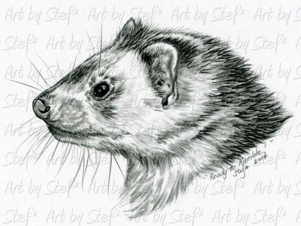 Ferrets; Ready To Rumble Charcoal Sketch; Charcoal Sketch; Stef