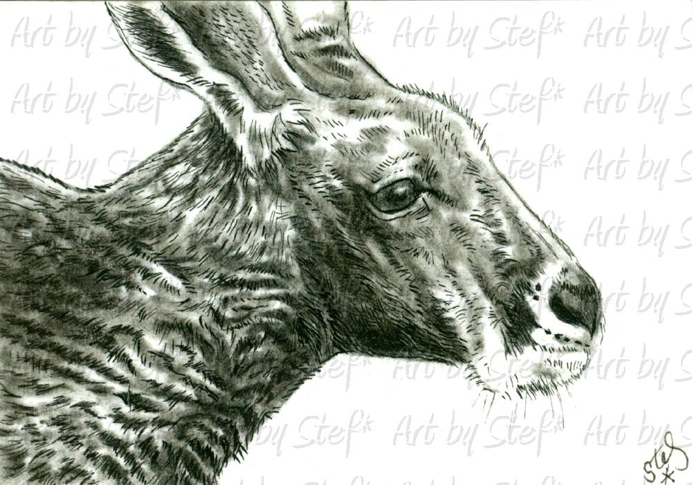 Other Animals; Red Kangaroo; ACEO; Stef