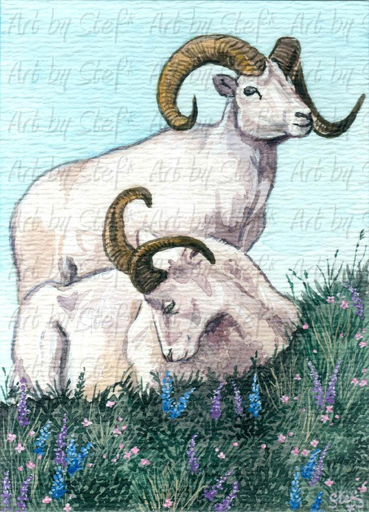 Other Animals; Spring Dall Sheep; ACEO; Stef