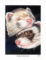 Ferrets; The Bond - Best Friends (Print); The Bond - Best Friends (Print); Stef