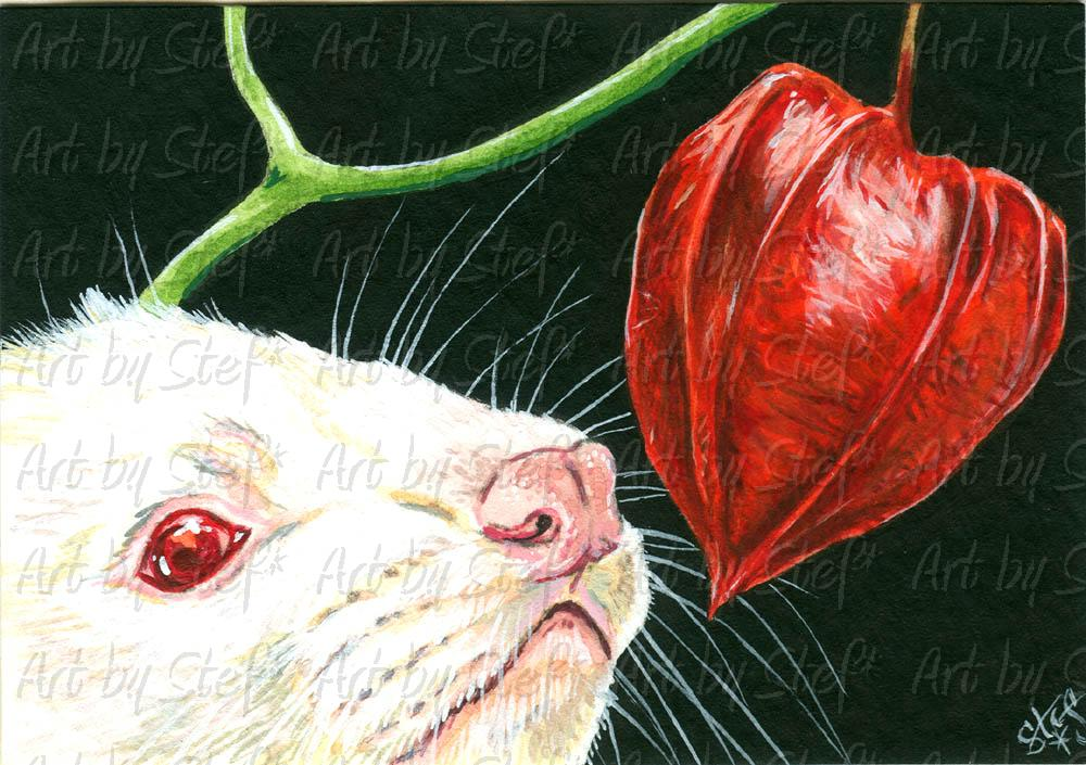 Ferrets; The Chinese Lantern; ACEO; Stef