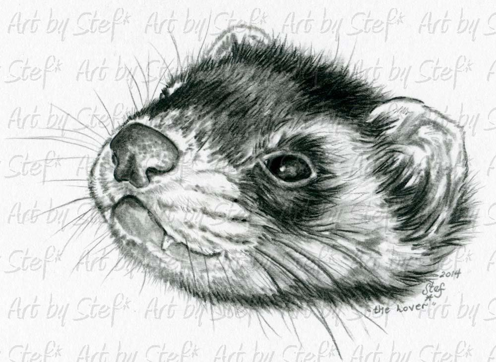 Ferrets; The Lover Charcoal Sketch; Charcoal Sketch; Stef