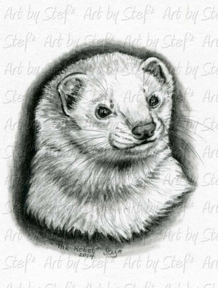 Ferrets; The Rebel Charcoal Sketch; Charcoal Sketch; Stef
